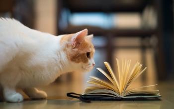 book-n-kitty