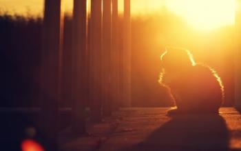 cat-at-dusk