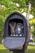 got-mail