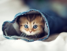kitty-in-jeans