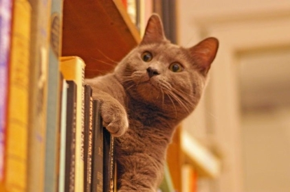Mr-Mou-in-the-shelves