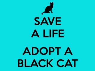 save-a-cat