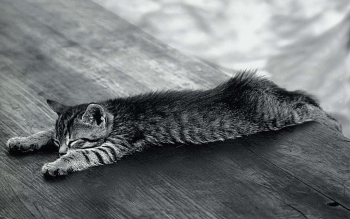 tired-kitty
